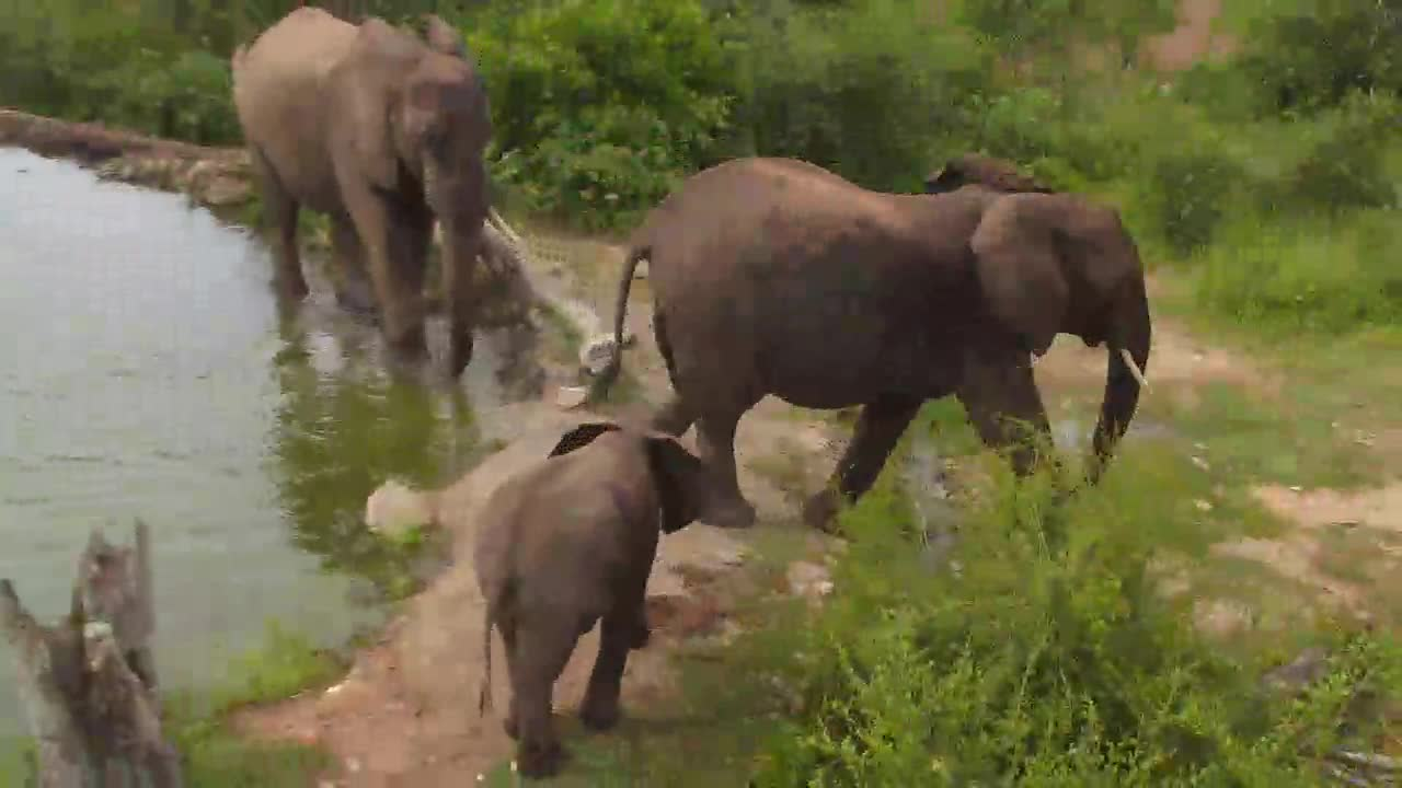 VIDEO:Elephants quick visit at Naledi waterhole