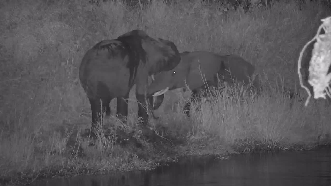 VIDEO:  Elephants playing along the river bank