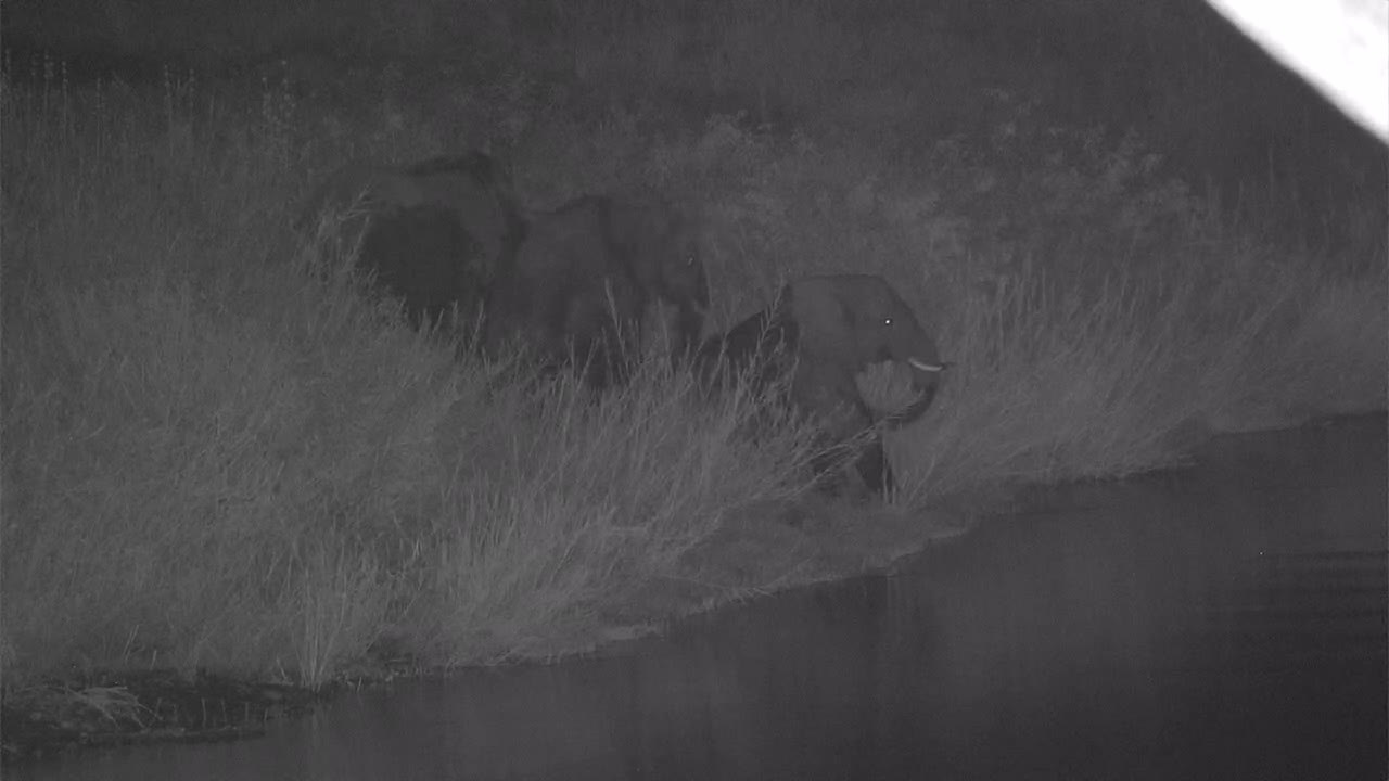 "VIDEO:  3 Elephants ""line dancing"" along the river bank"