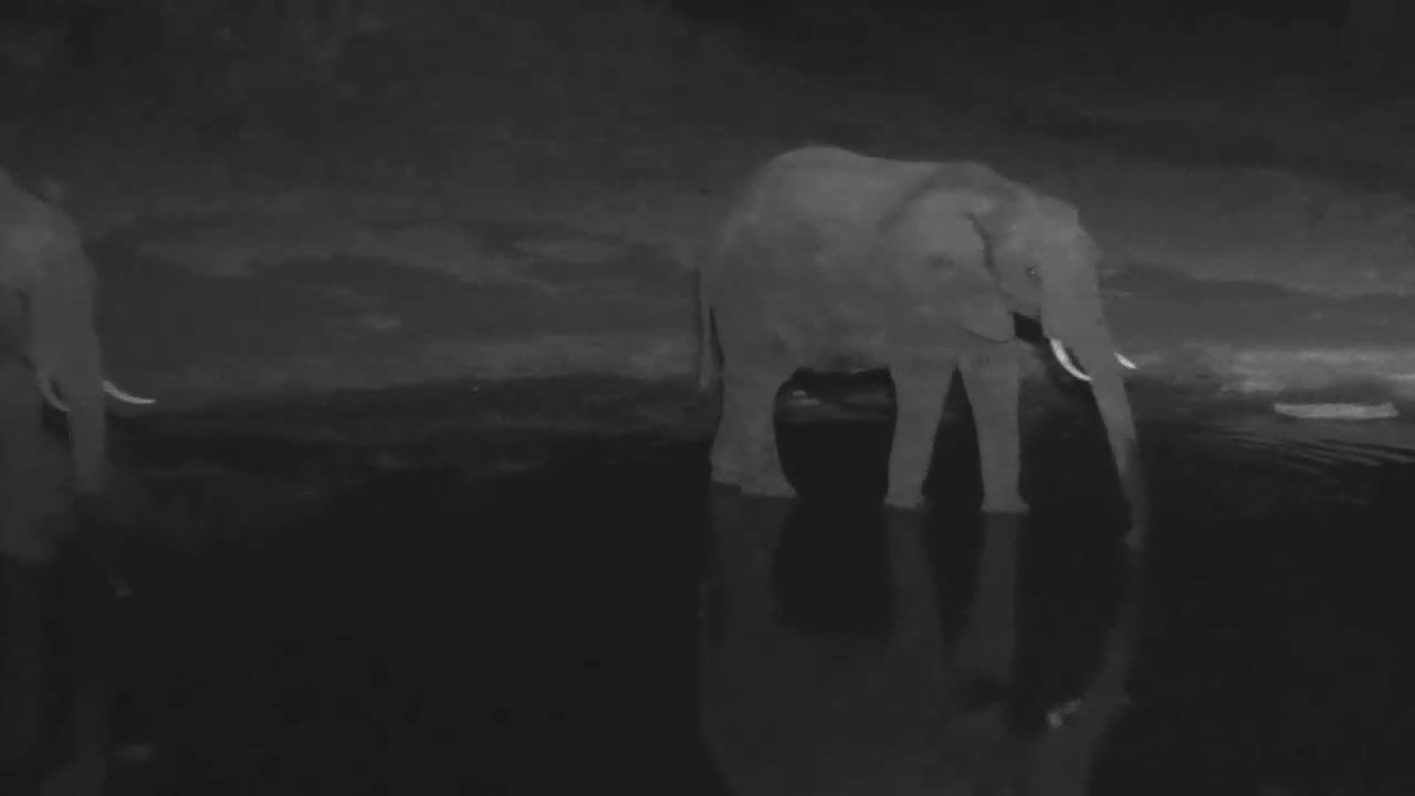 VIDEO: Elephant came for a drink to the waterhole