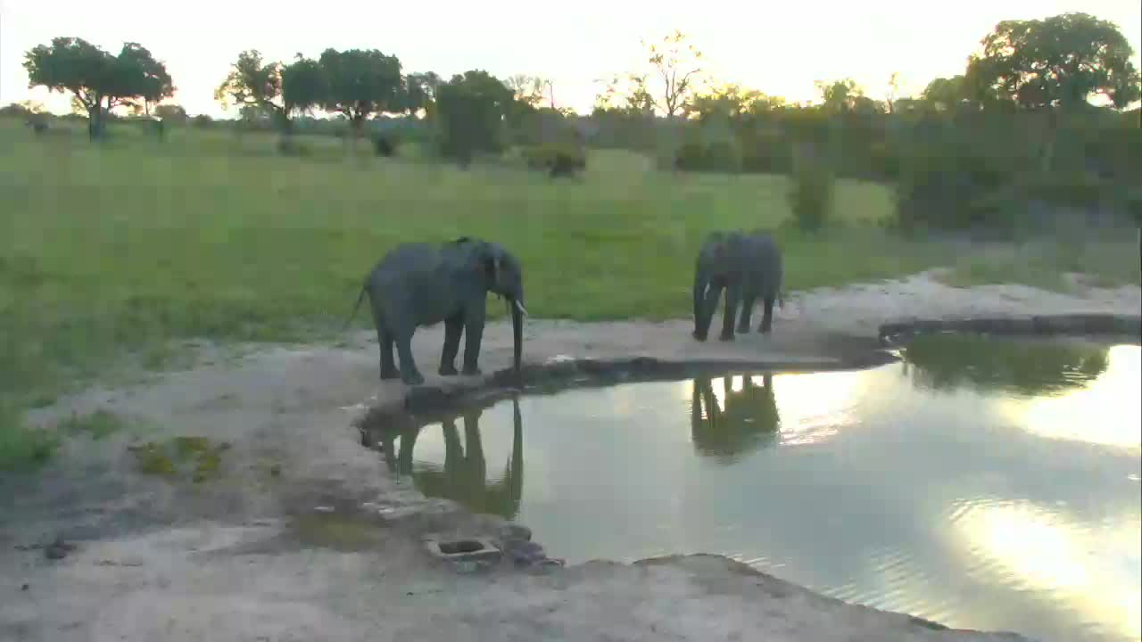 VIDEO: 2 ELEPHANTS sizing each other up for a quick joust