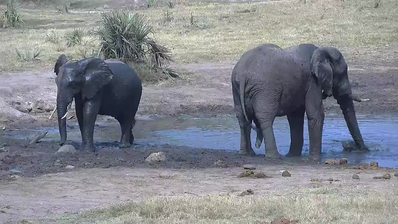 VIDEO:  Elephants bathing in the water