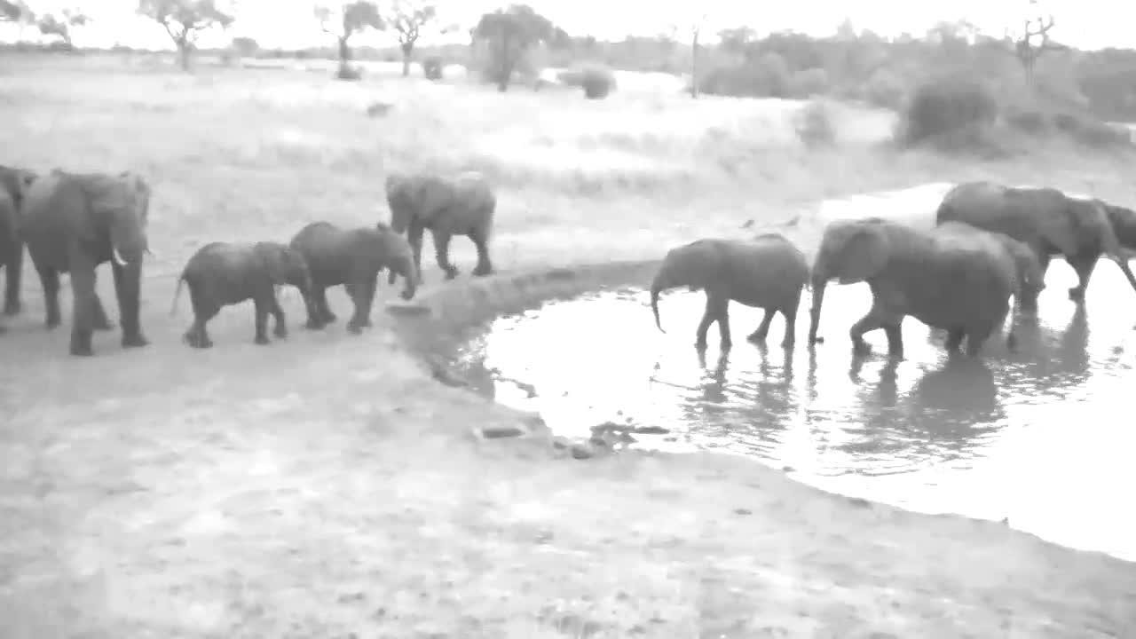 VIDEO:  Breeding Herd of Elephants