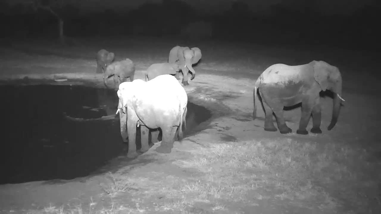 VIDEO:  Lots of Elephants