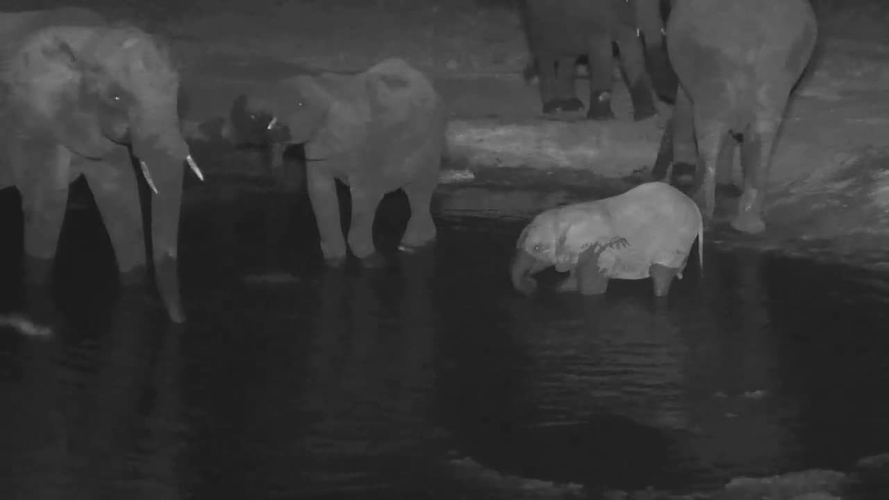 VIDEO:  Baby Elephant playing in the water