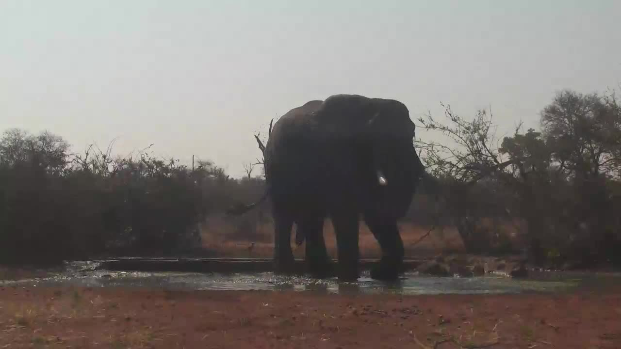 VIDEO:  Elephant enjoying a splash in the water
