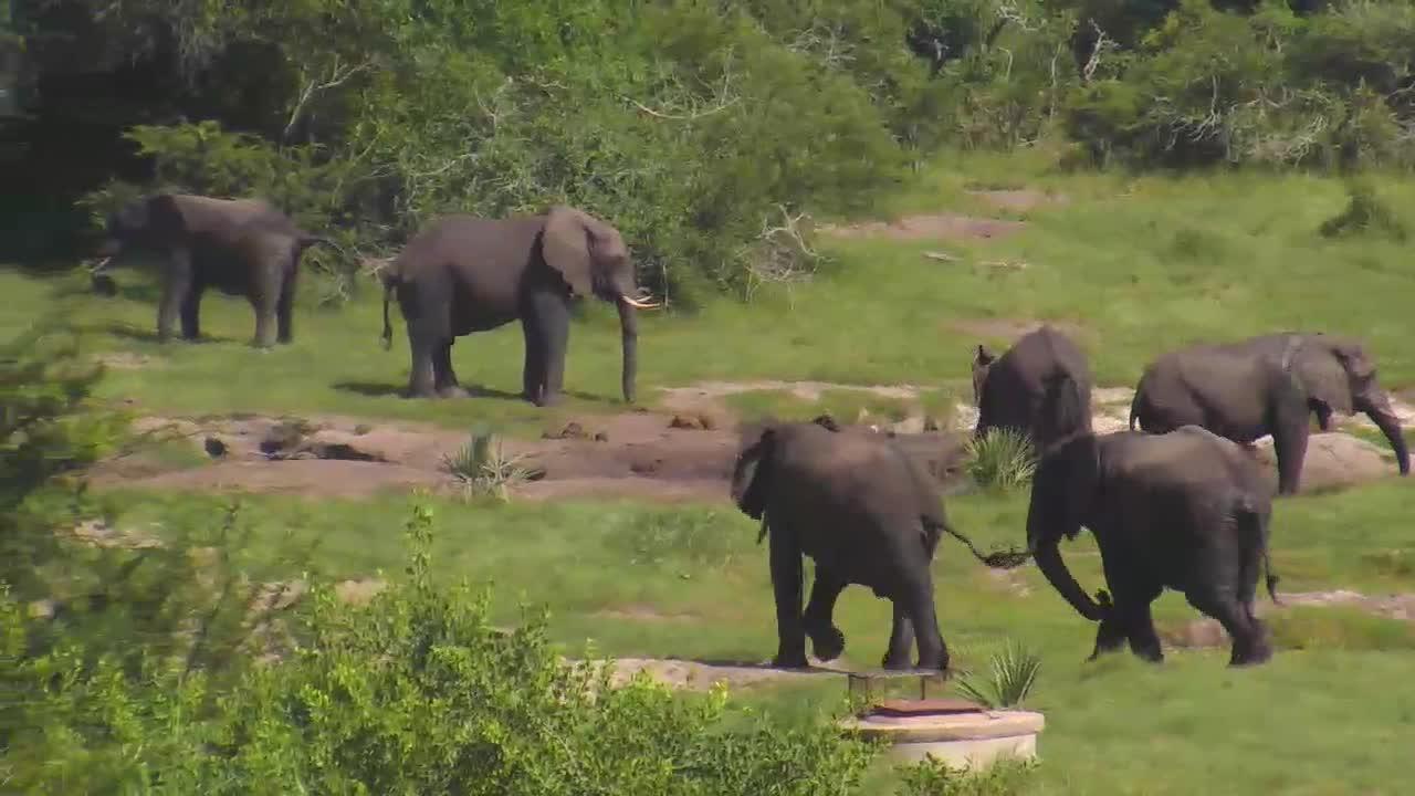Elephant activity at Tembe