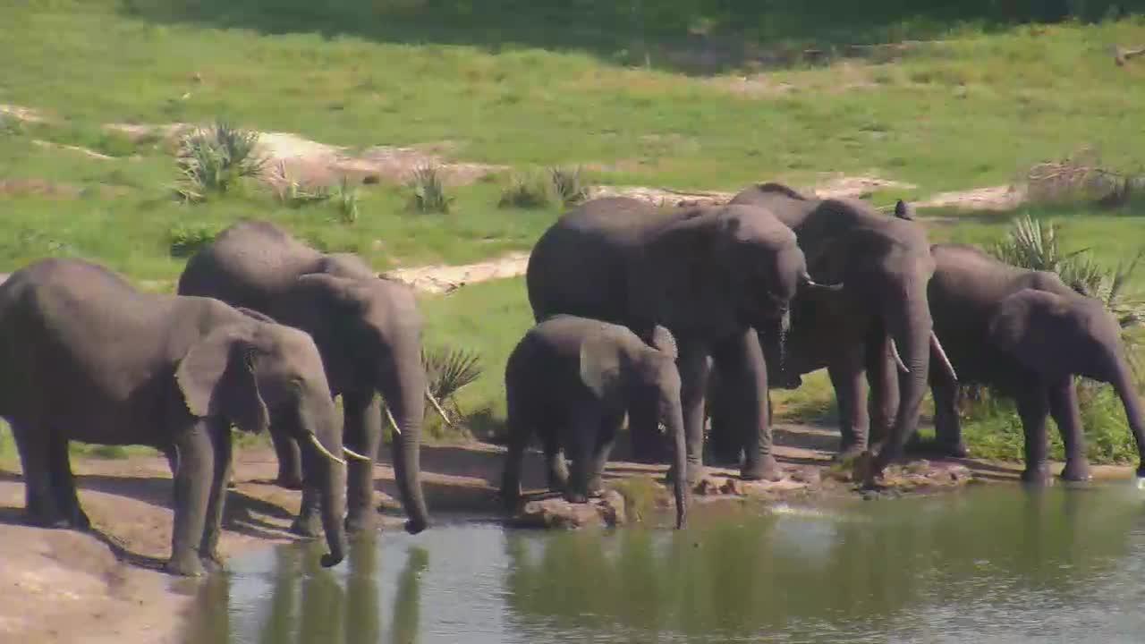 VIDEO:  ELEPHANTS enjoying a drink
