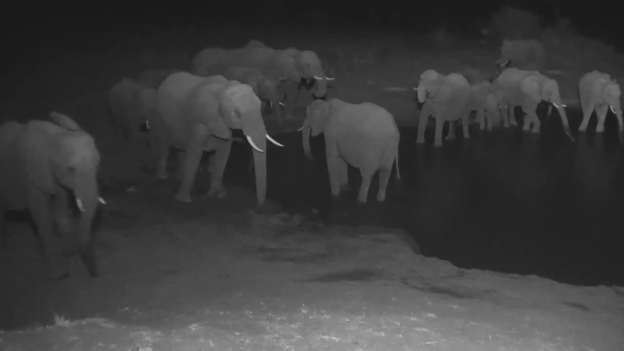 VIDEO: Large Breeding Herd Spend a long time at the Waterhole Tonight