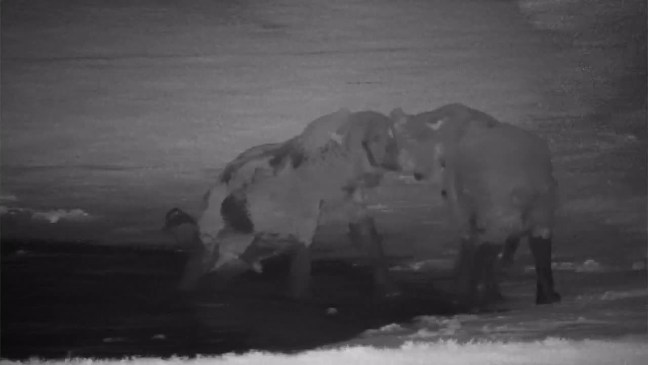 VIDEO: Two Elephants playing in and around the waterhole
