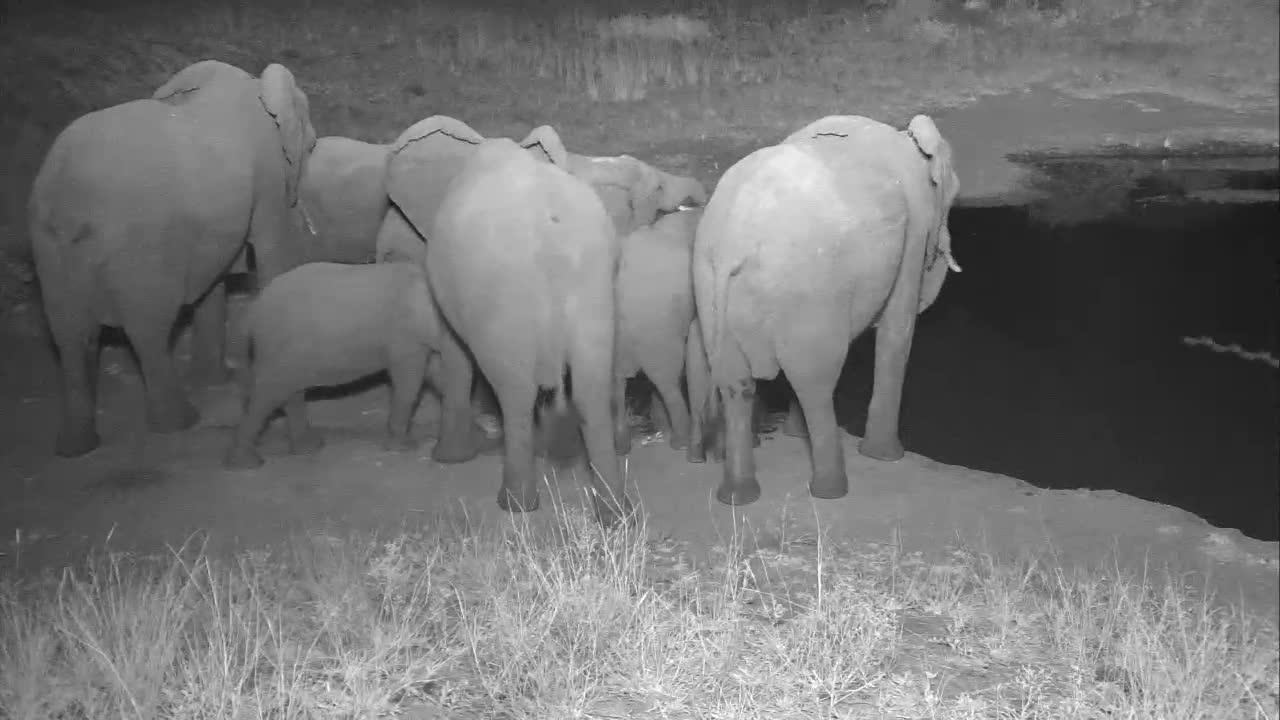 VIDEO:  Elephant Bottoms