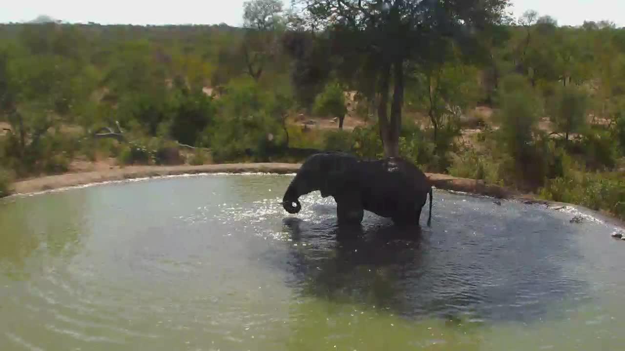 VIDEO:Elephant taking a bath