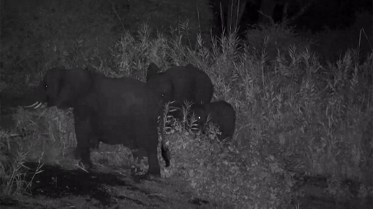 VIDEO:Elephant family