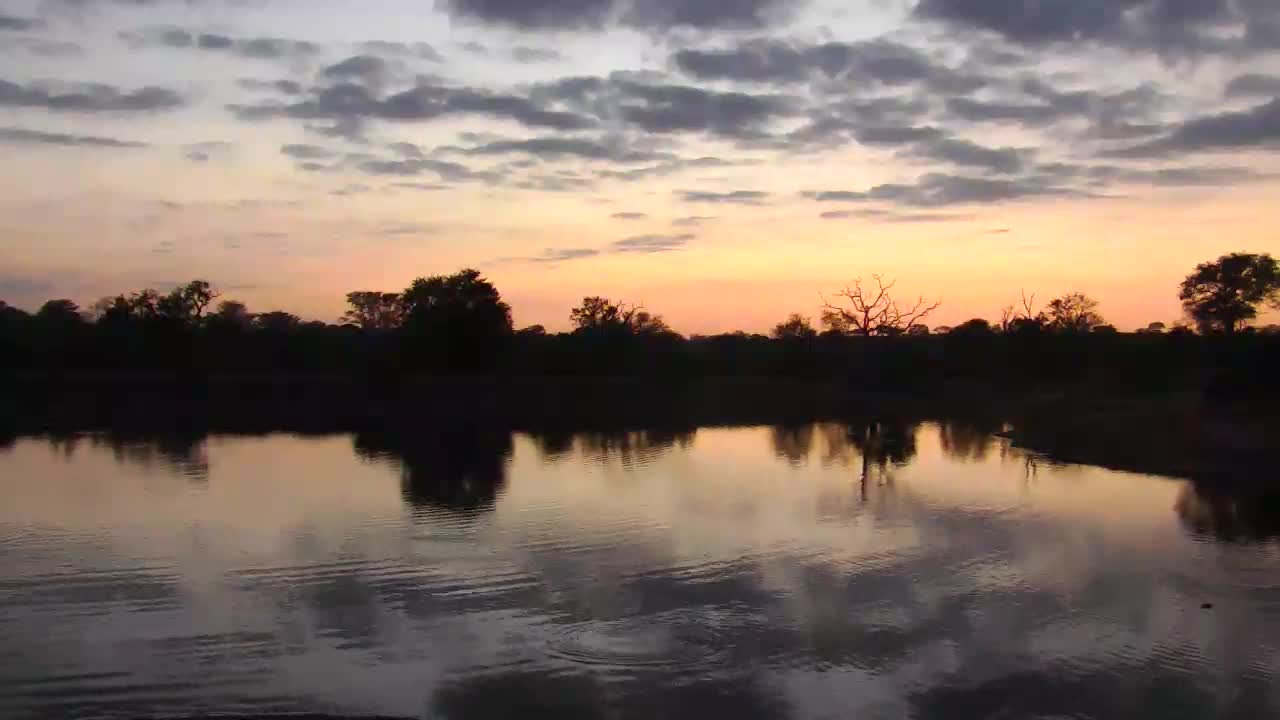 VIDEO: Hippos in a dispute during a beautiful morning dawn