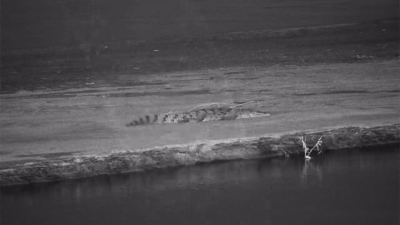 VIDEO:  CROCODILE resting on the sandbar