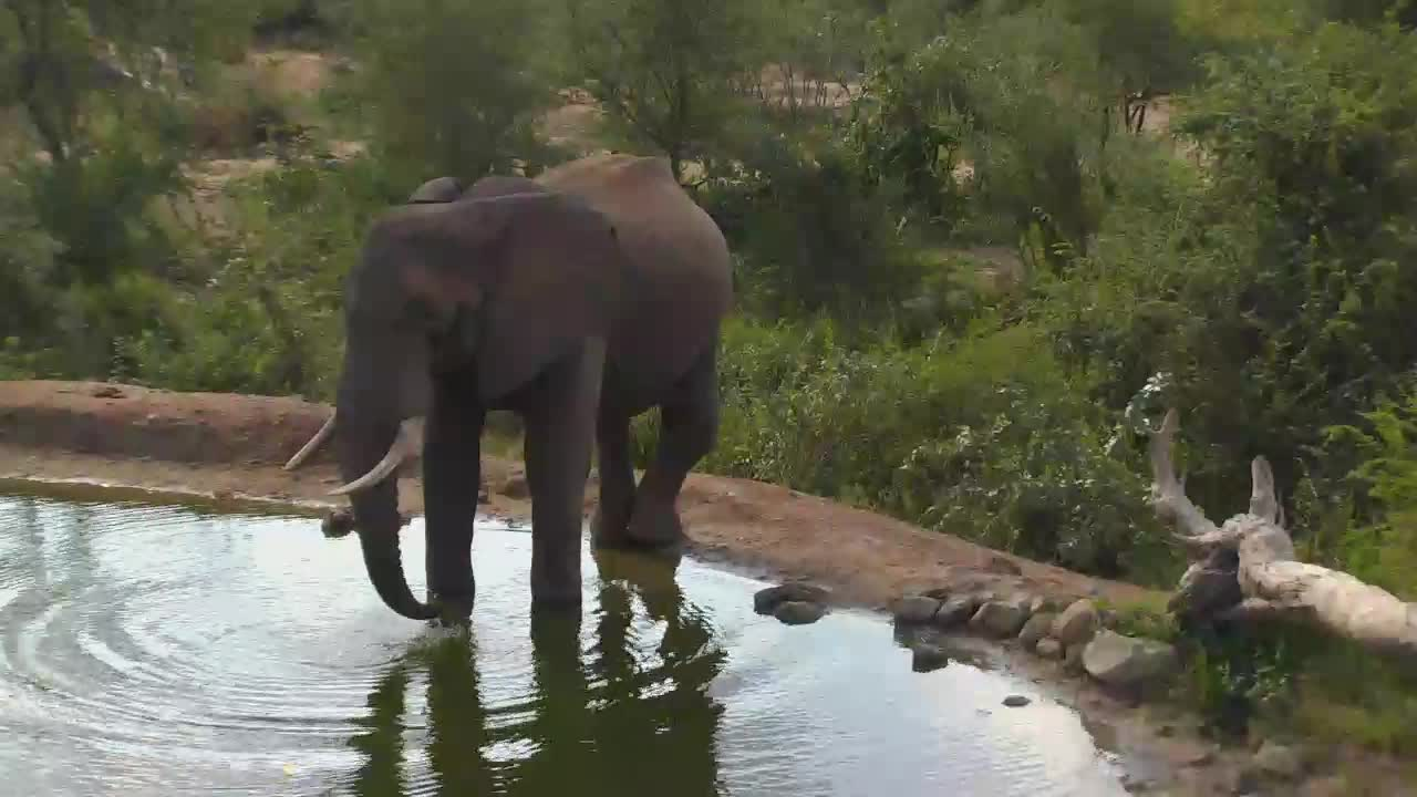 VIDEO:  ELEPHANT ENJOYING A DRINK