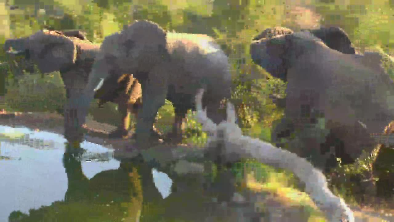 VIDEO:Lots of Elephants come for a drink of water