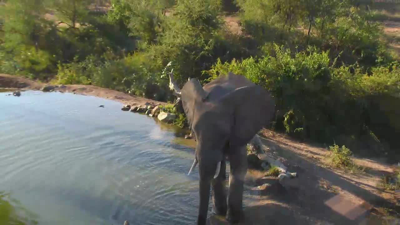 VIDEO: Elephant makes a short visit
