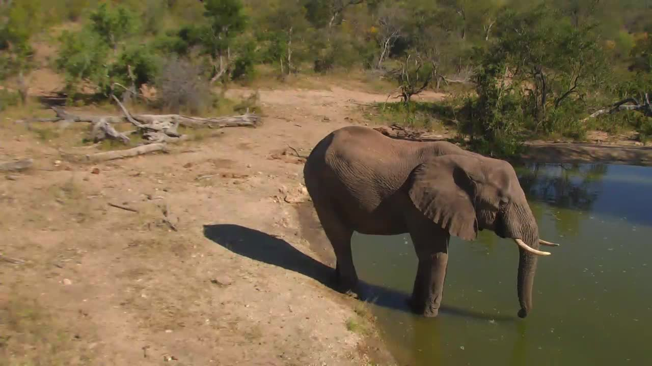 VIDEO: More Elephants visit at the waterhole and have a drink