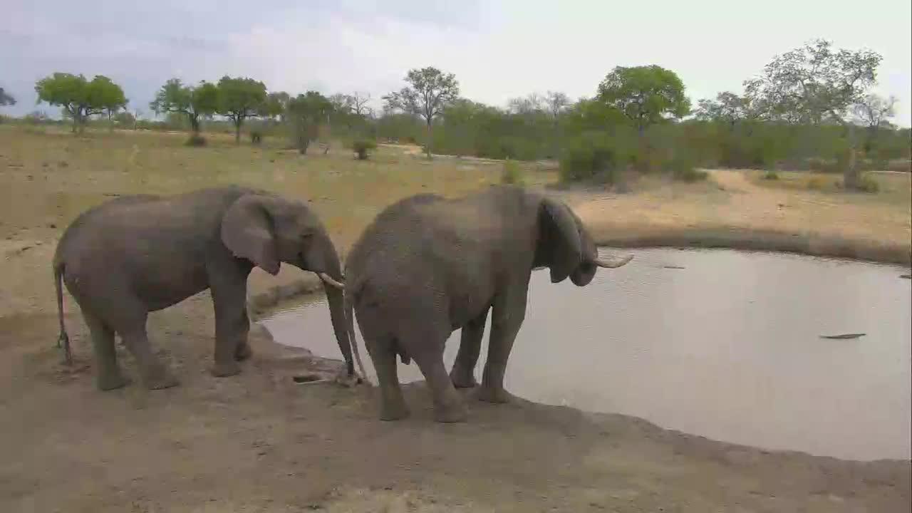 VIDEO: Elephants at Nkorho