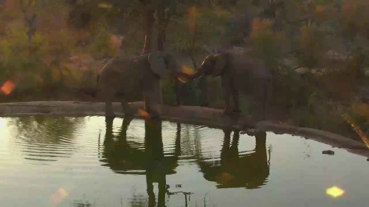 "VIDEO: Elephants ""shadow games"""