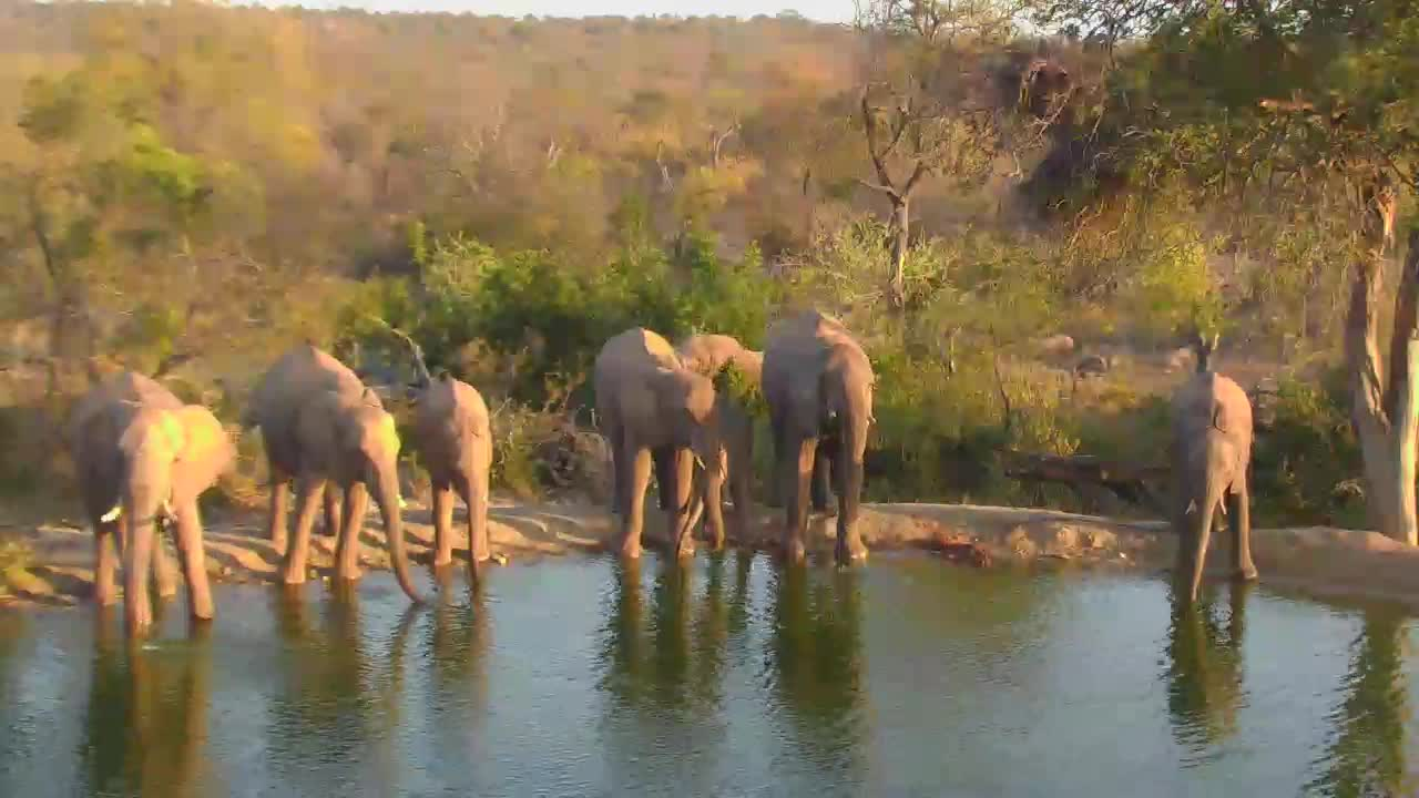 VIDEO:Herd of Elephants came for a drink of water