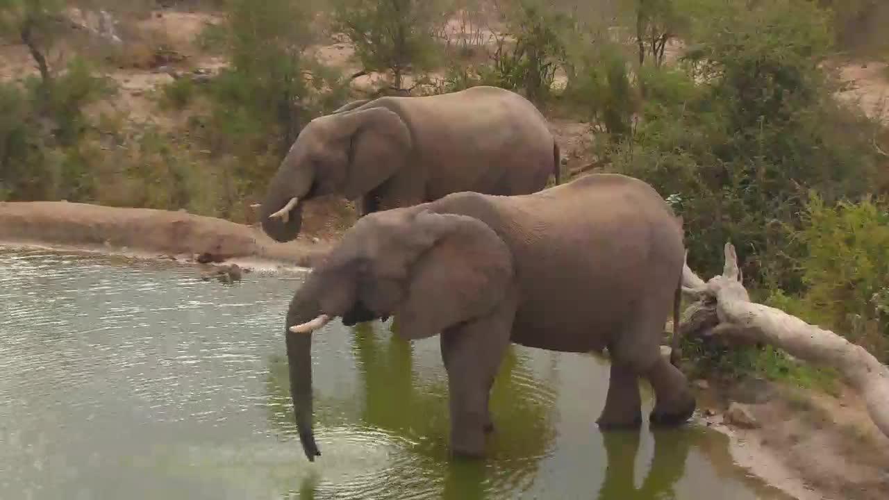 VIDEO:Two Elephants drinking at Naledi