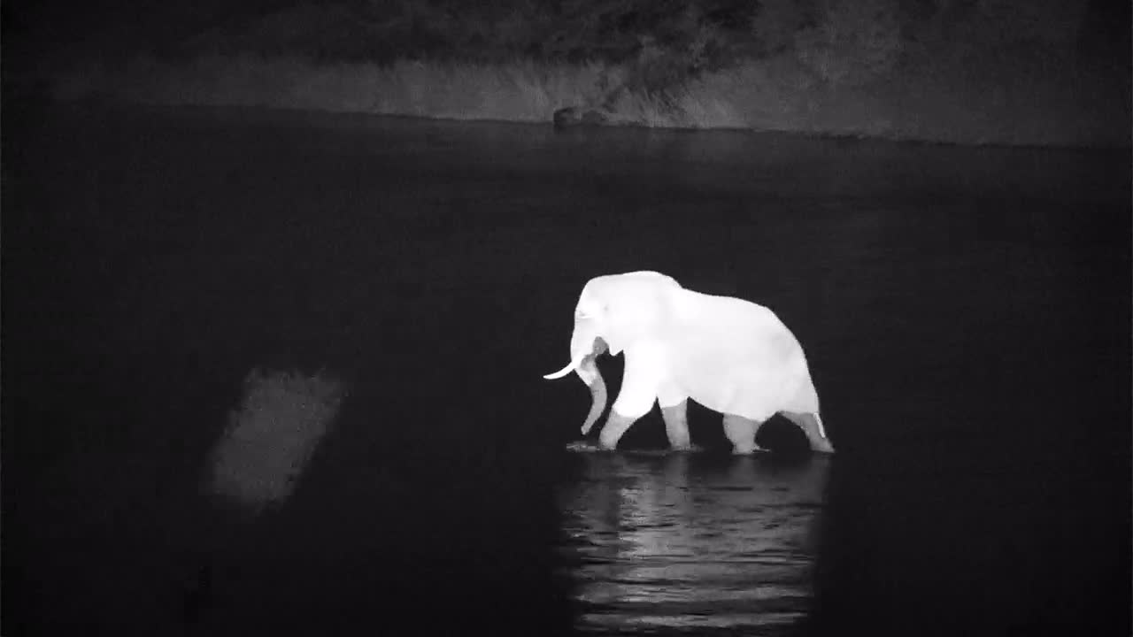 VIDEO:  Elephant crossing the Olifants River