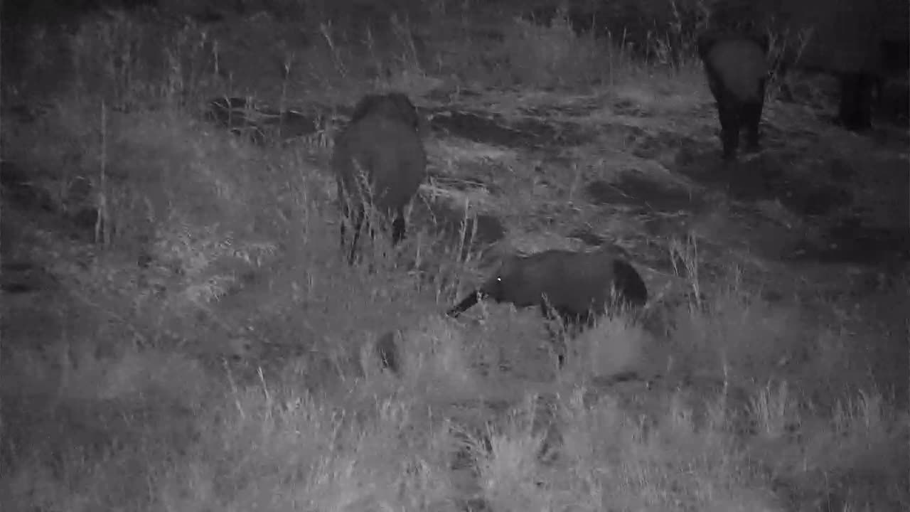 VIDEO:   Young Elephants scratching in the dirt while other graze along the river bank