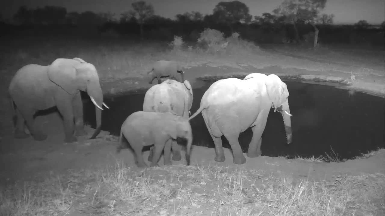 VIDEO:Elephant family coming to drink