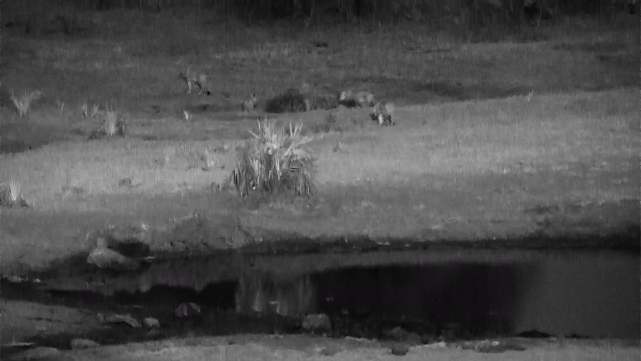 VIDEO: Lioness with her 3 cubs walking in the far area
