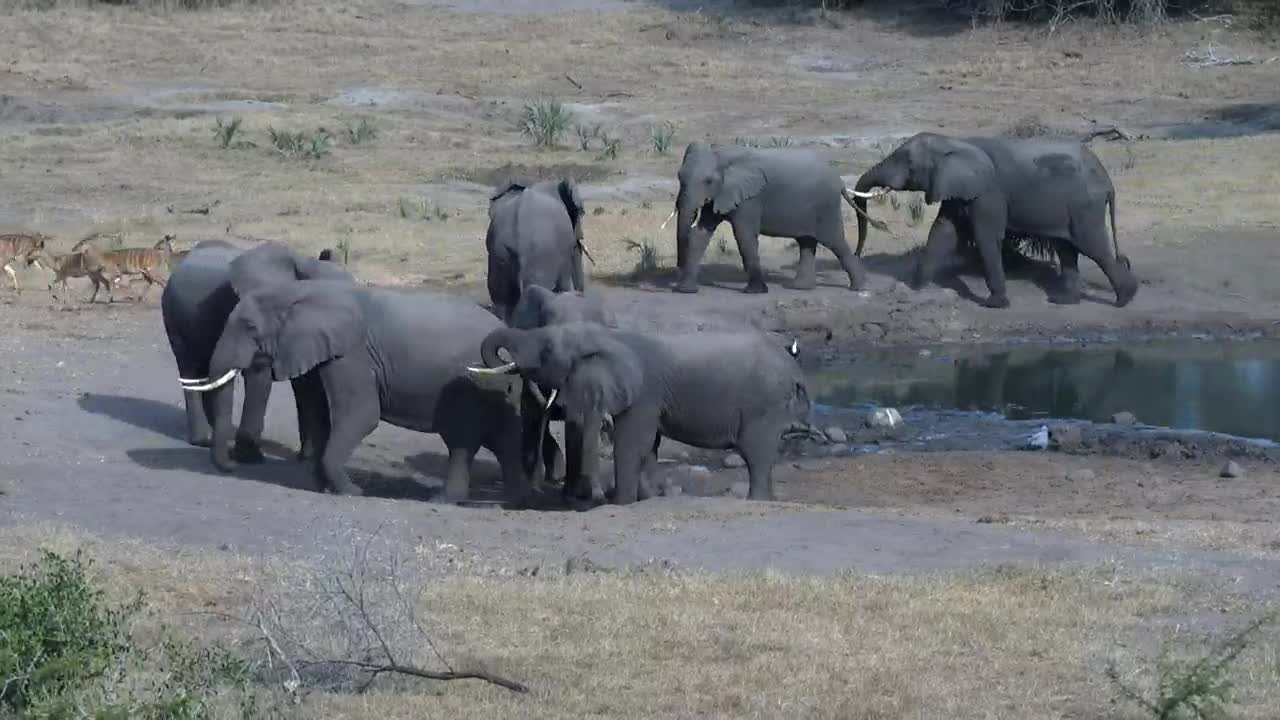 VIDEO: Elephants - very argumentative - like fresh water - in the background the Nyalas are very vigilant.