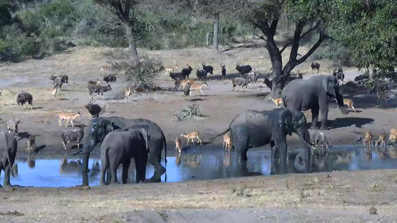 VIDEO: Elephants, Nyalas and Impalas oh my, there are a lot of them