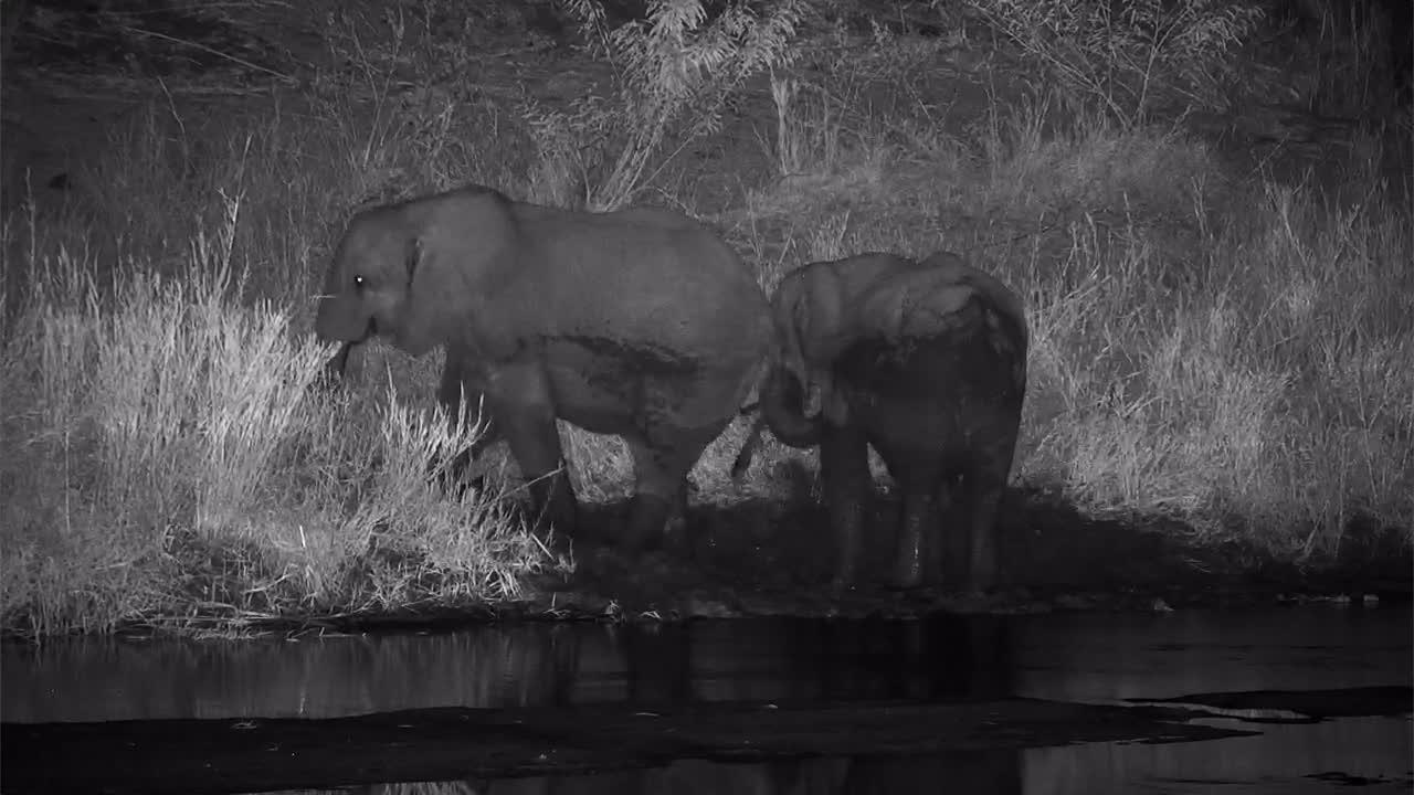 VIDEO: Elephants enjoy the mud at the bank