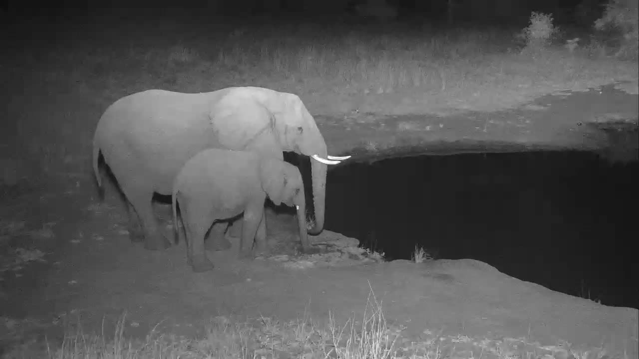 VIDEO: Elephant with a Young one