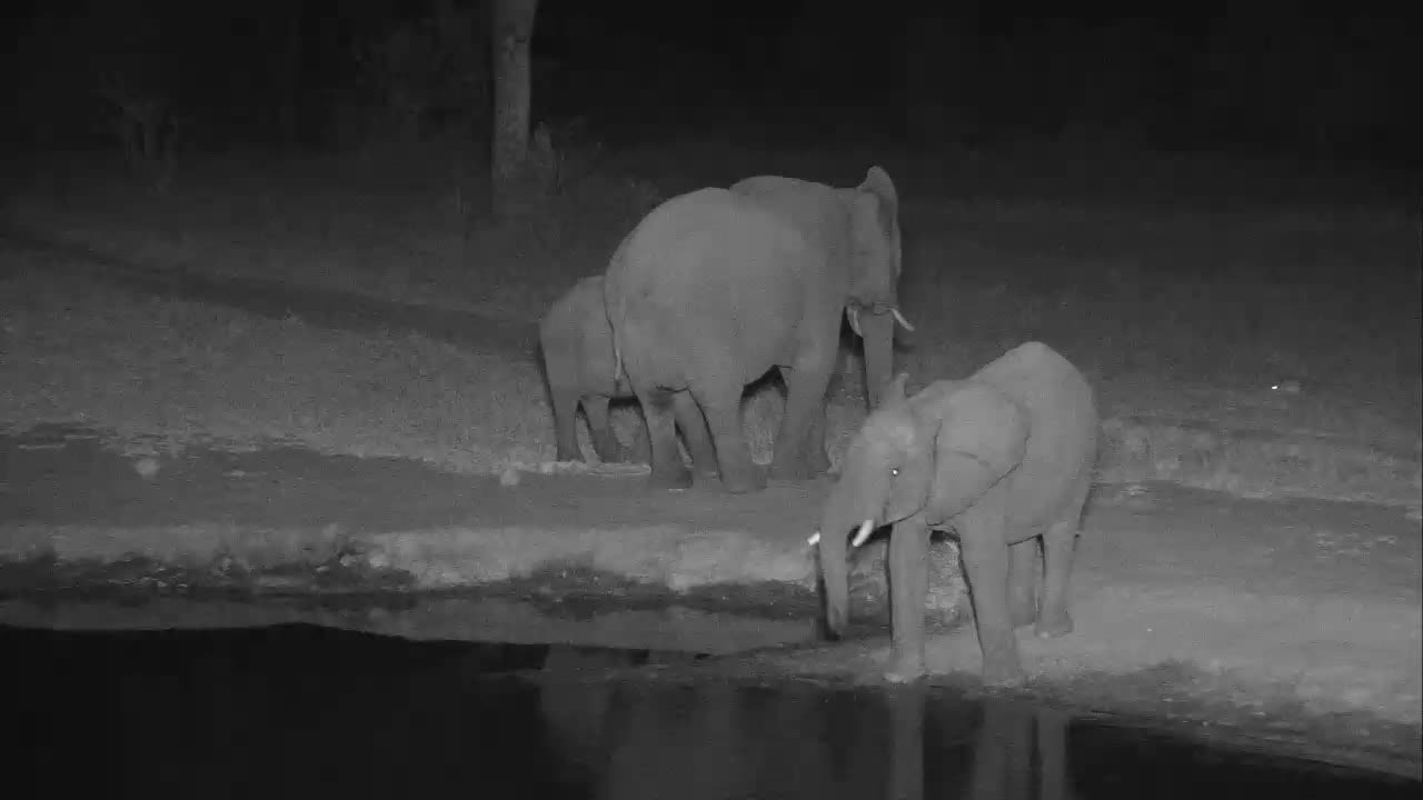 VIDEO: Small Breeding herd of Elephants