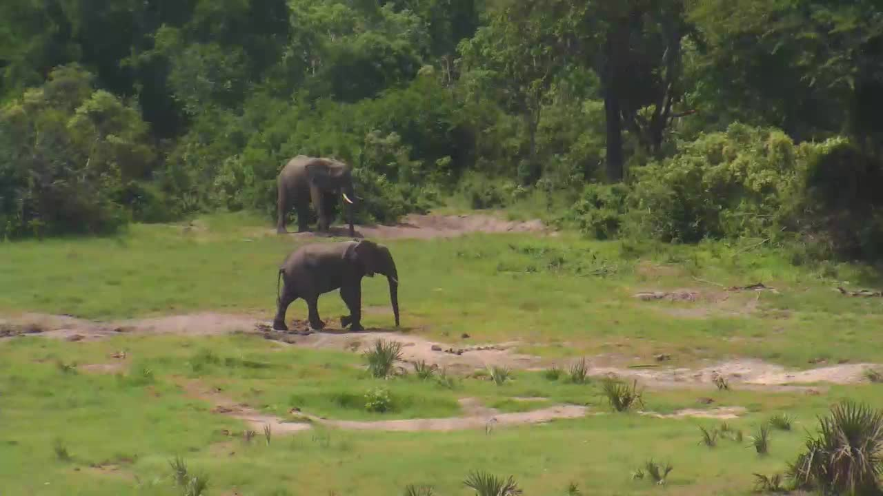 VIDEO: Beautiful Green Grass and Elephants at Tembe