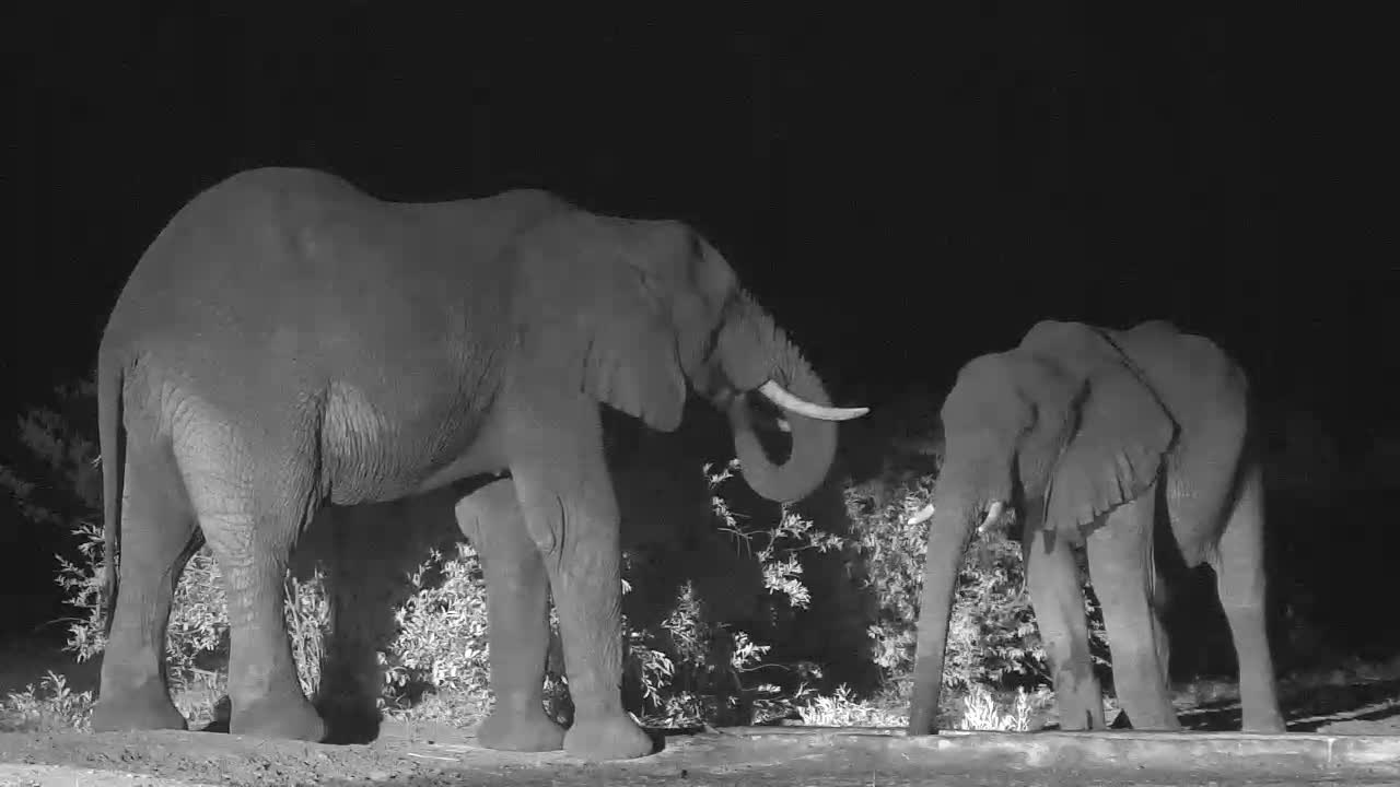VIDEO:  Elephant Herd having a Drink at Cat-EYE Cam