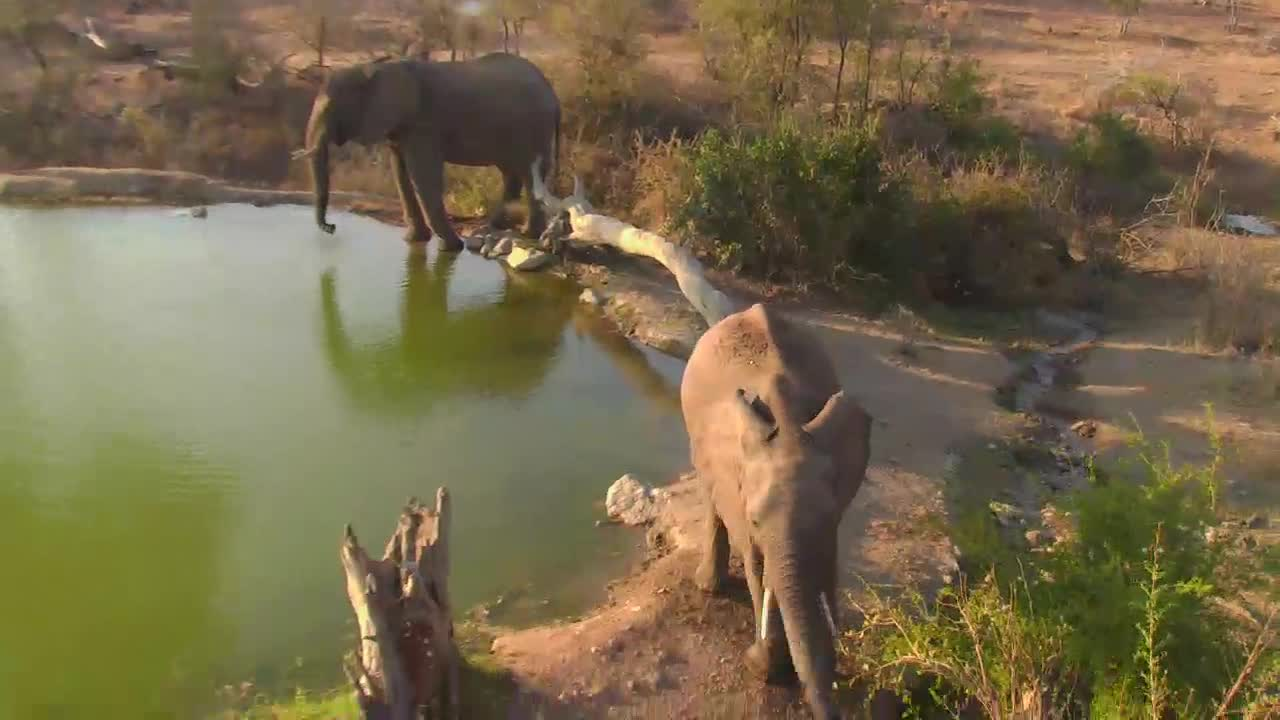 VIDEO: Elephants enjoy the water, eating some leaves and went off into the bushes