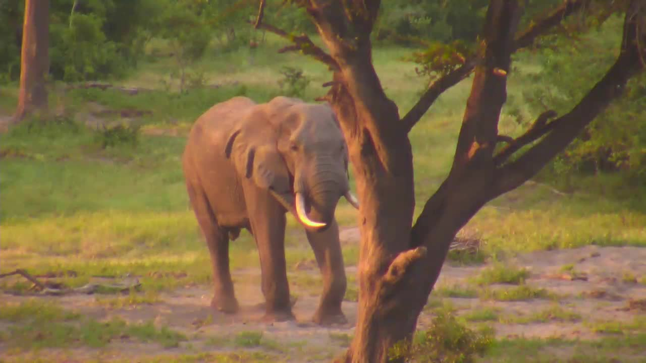 VIDEO:Elephant Enjoying his Dust Bath