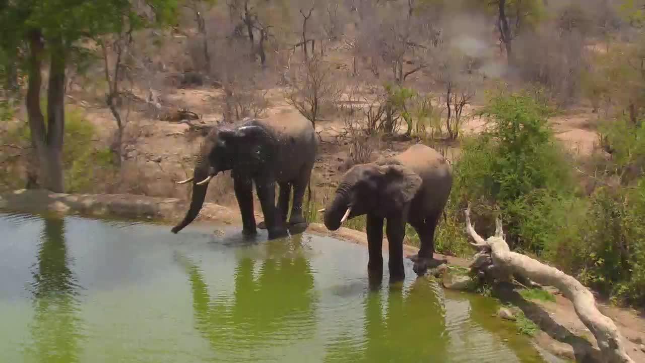 VIDEO: Elephants having a drink.