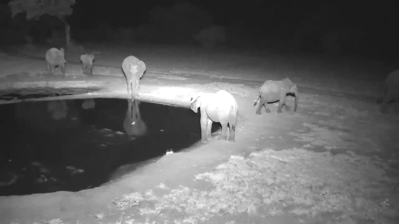 VIDEO: Elephants - tried to drink but it does not taste, so they only played with the water