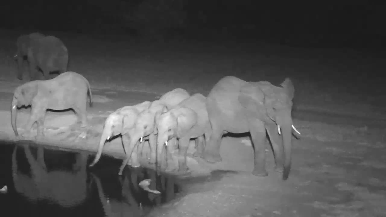 VIDEO: Elephants came again for a short drink to the waterhole
