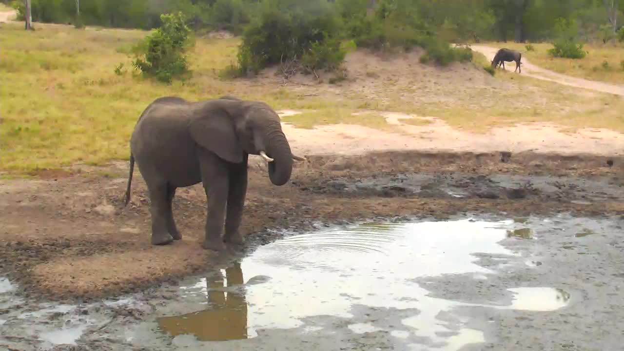 VIDEO:Elephant comes to the waterhole