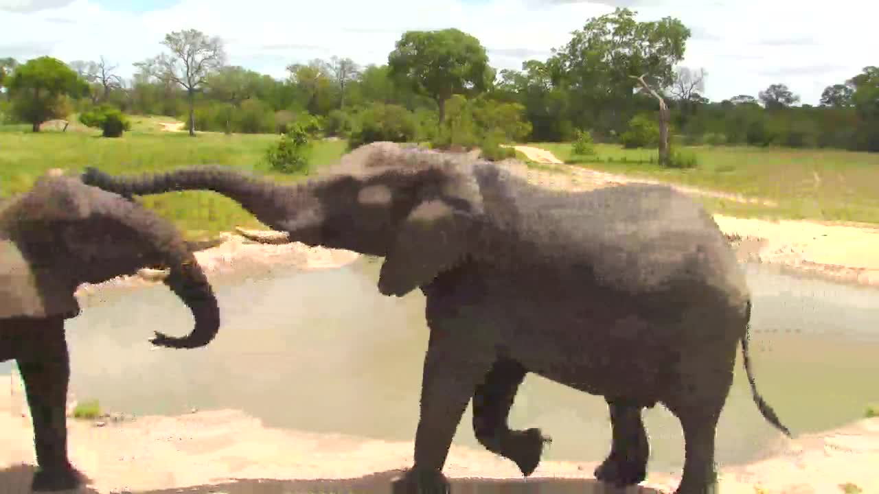 VIDEO: Elephants sparring at the waterhole