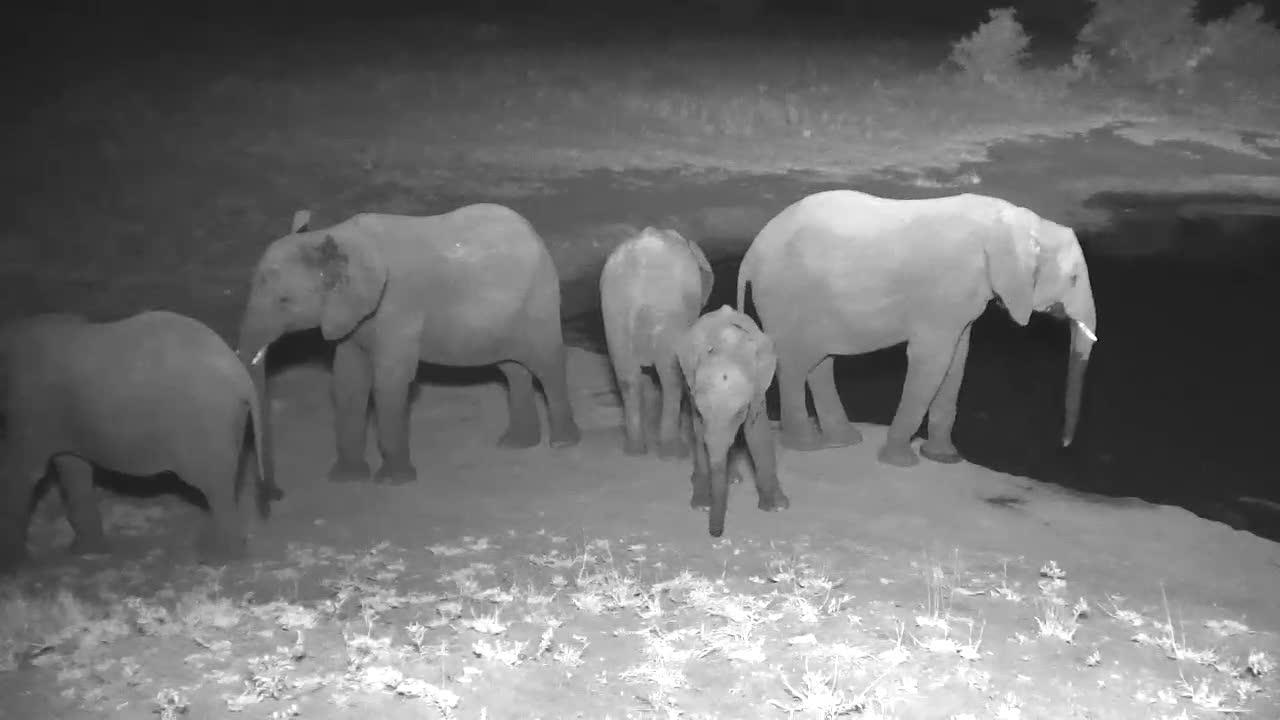 VIDEO:   Lots of Elephants around the waterhole