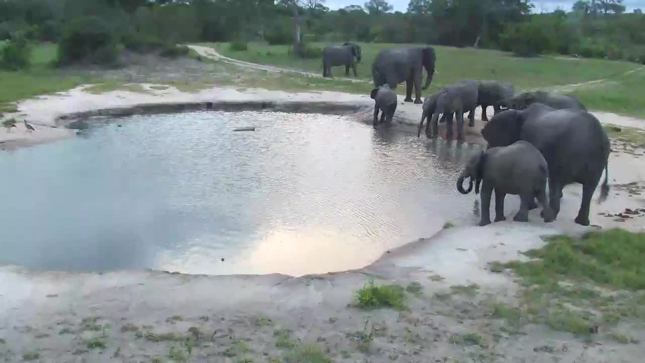 VIDEO: Elephants drinking at the waterhole