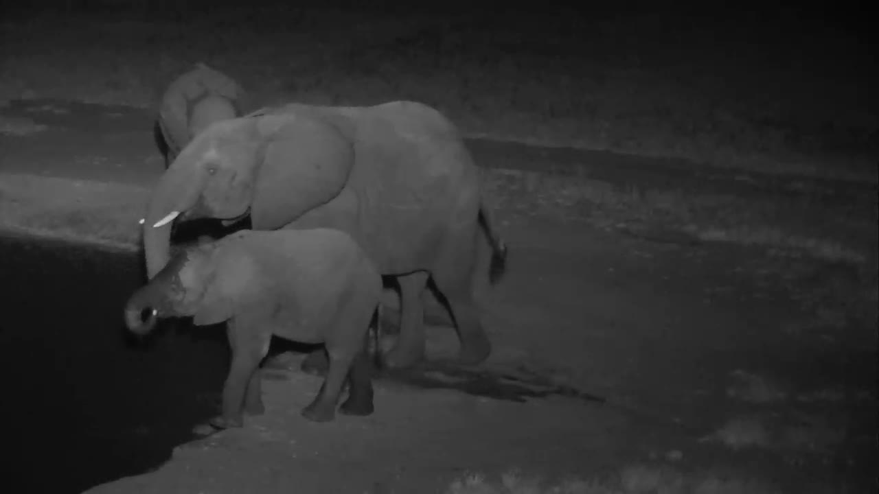 VIDEO:  Small herd of ELEPHANTS stopping for a drink