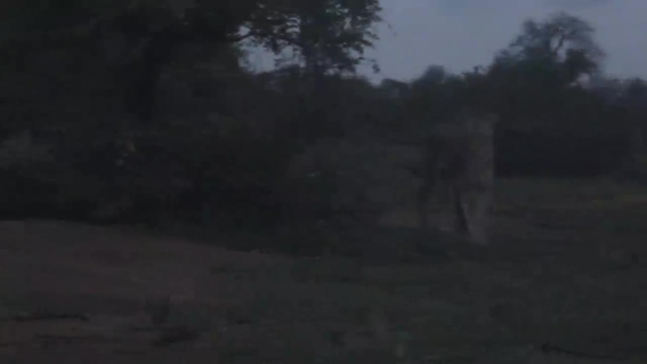 VIDEO: Short visit by a couple of Lions