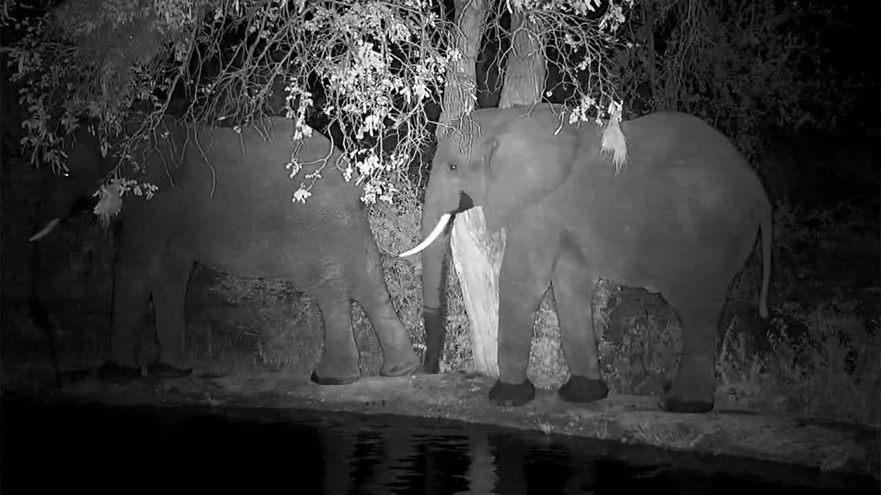 VIDEO: Elephants - a bit aggressive - drink and fight around the waterhole